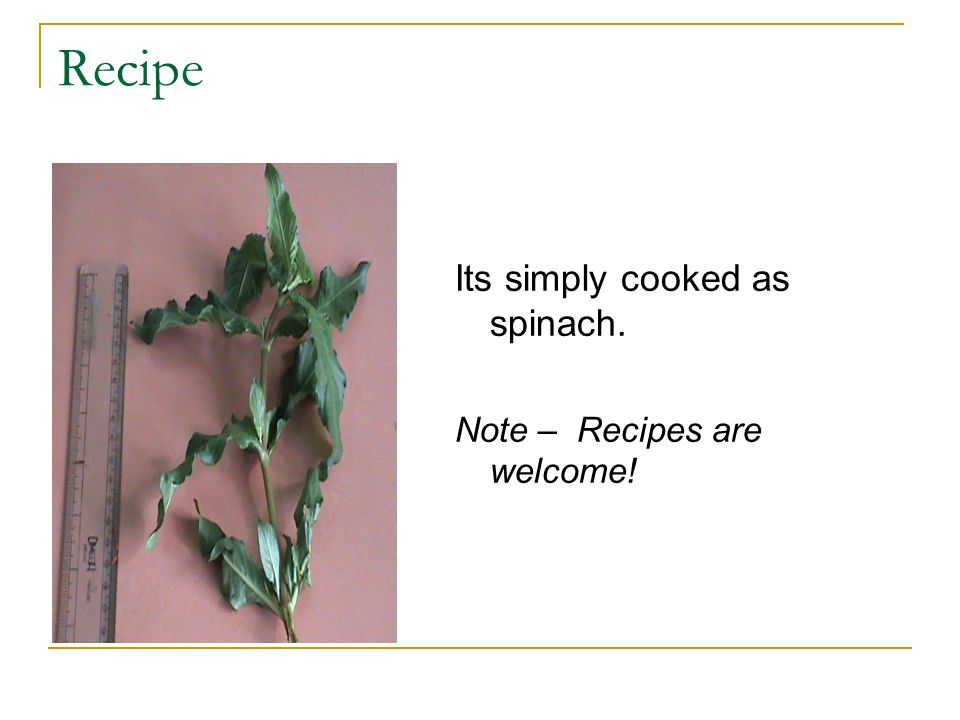 Recipe Its simply cooked as spinach. Note – Recipes are welcome!