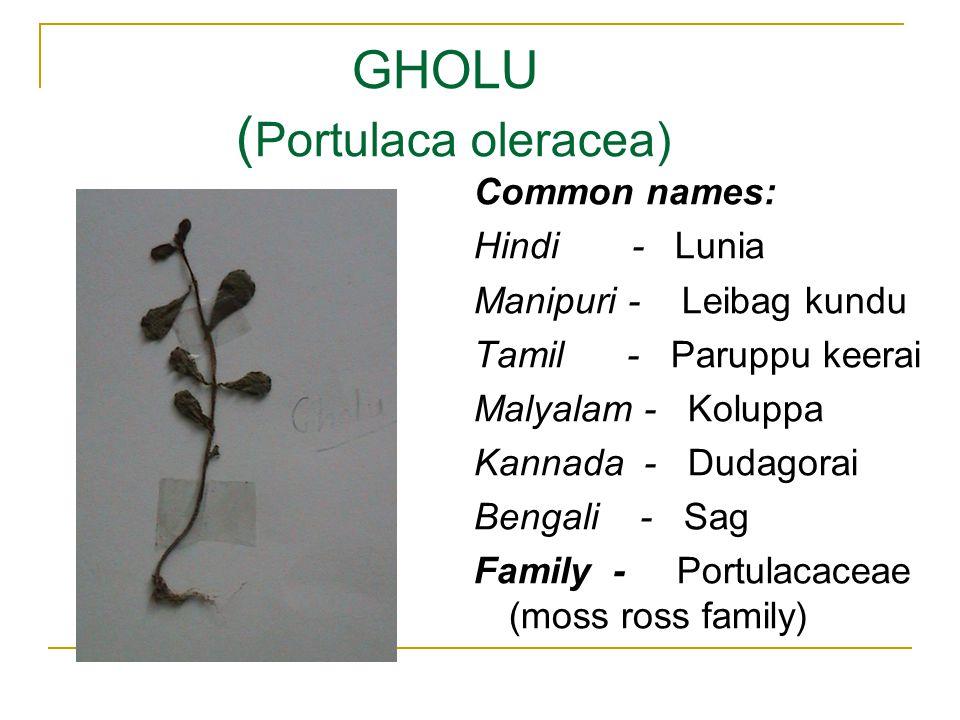 GHOLU ( Portulaca oleracea) Common names: Hindi - Lunia Manipuri - Leibag kundu Tamil - Paruppu keerai Malyalam - Koluppa Kannada - Dudagorai Bengali - Sag Family - Portulacaceae (moss ross family)