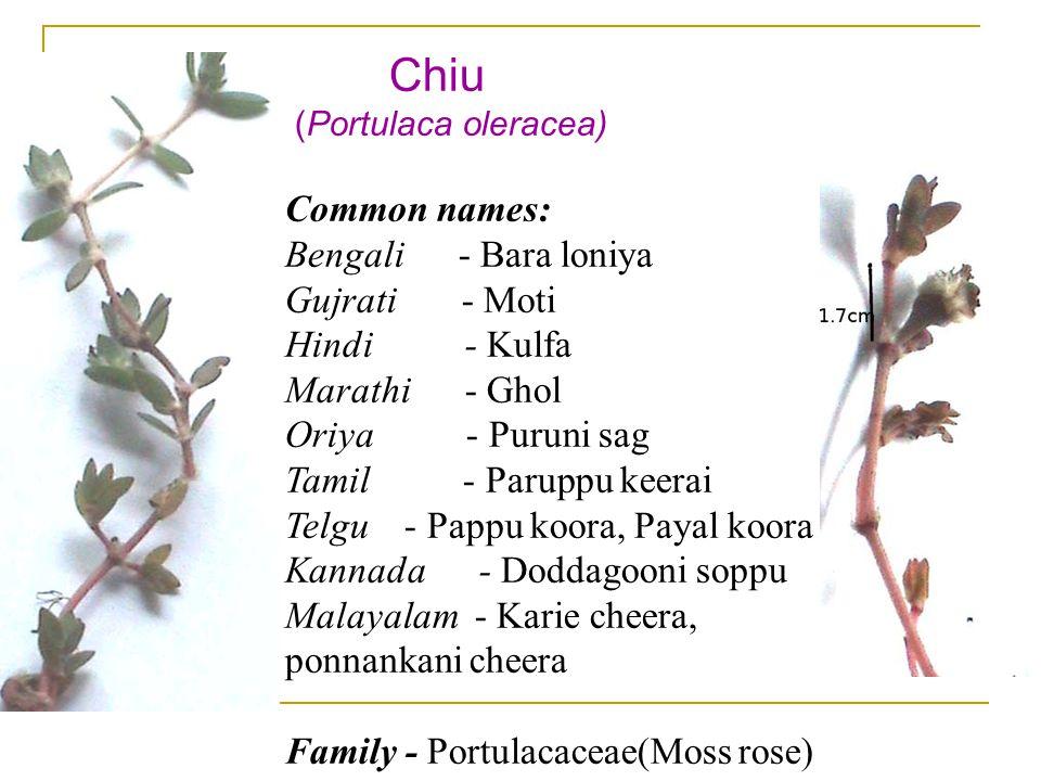Chiu (Portulaca oleracea) Common names: Bengali - Bara loniya Gujrati - Moti Hindi - Kulfa Marathi - Ghol Oriya - Puruni sag Tamil - Paruppu keerai Telgu - Pappu koora, Payal koora Kannada - Doddagooni soppu Malayalam - Karie cheera, ponnankani cheera Family - Portulacaceae(Moss rose)
