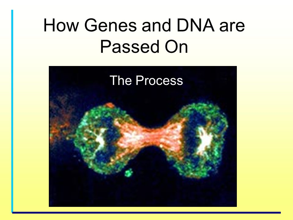 How Genes and DNA are Passed On The Process