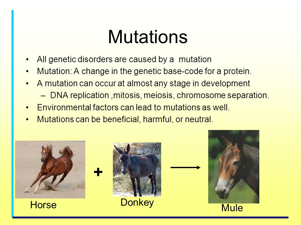 Mutations All genetic disorders are caused by a mutation Mutation: A change in the genetic base-code for a protein. A mutation can occur at almost any