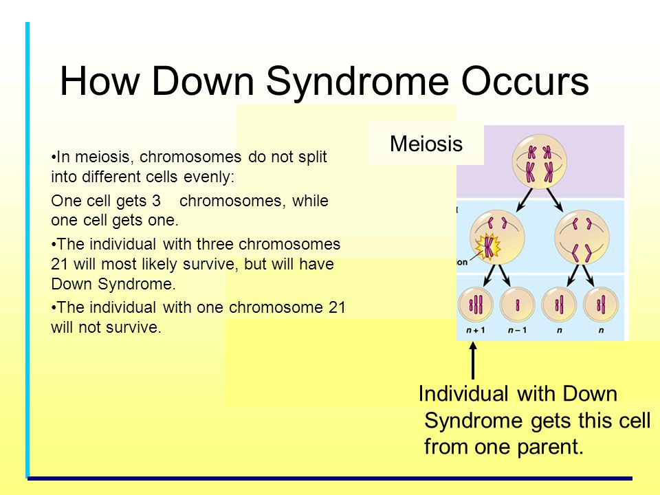 How Down Syndrome Occurs Meiosis Individual with Down Syndrome gets this cell from one parent. In meiosis, chromosomes do not split into different cel