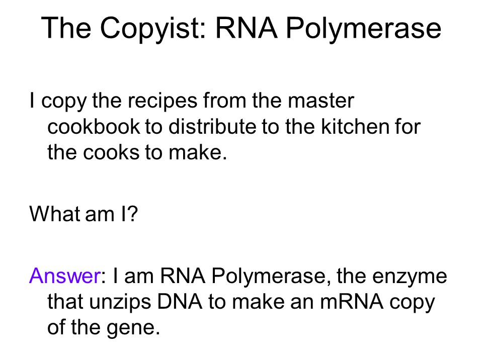 The Copyist: RNA Polymerase I copy the recipes from the master cookbook to distribute to the kitchen for the cooks to make.