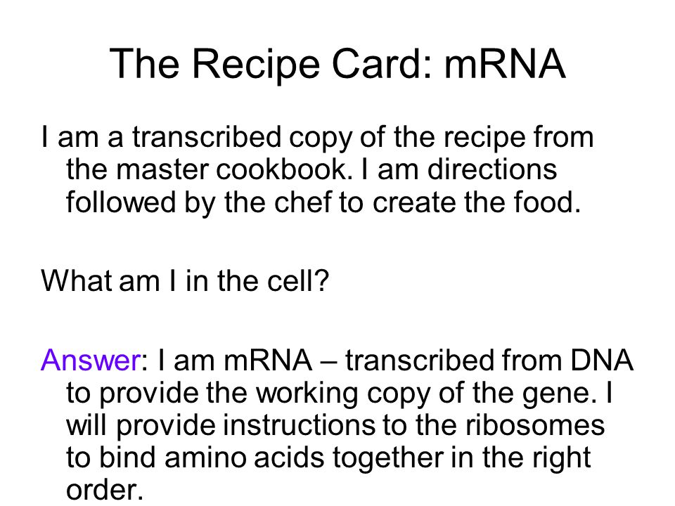 The Recipe Card: mRNA I am a transcribed copy of the recipe from the master cookbook.