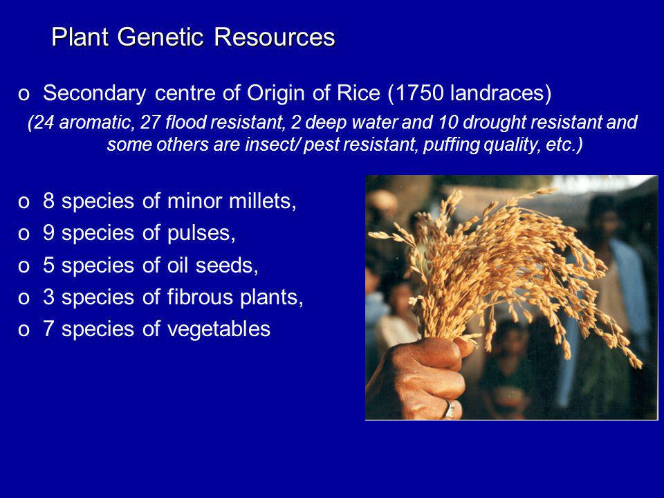 Plant Genetic Resources oSecondary centre of Origin of Rice (1750 landraces) (24 aromatic, 27 flood resistant, 2 deep water and 10 drought resistant and some others are insect/ pest resistant, puffing quality, etc.) o8 species of minor millets, o9 species of pulses, o5 species of oil seeds, o3 species of fibrous plants, o7 species of vegetables