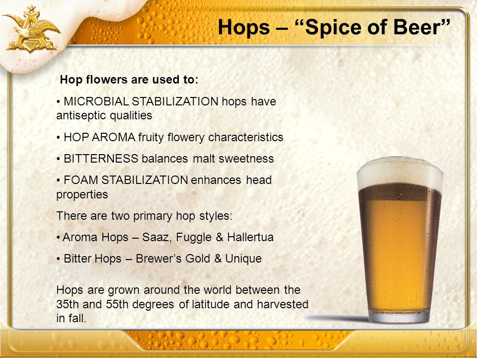 Hops – Spice of Beer Hop flowers are used to: MICROBIAL STABILIZATION hops have antiseptic qualities HOP AROMA fruity flowery characteristics BITTERNE