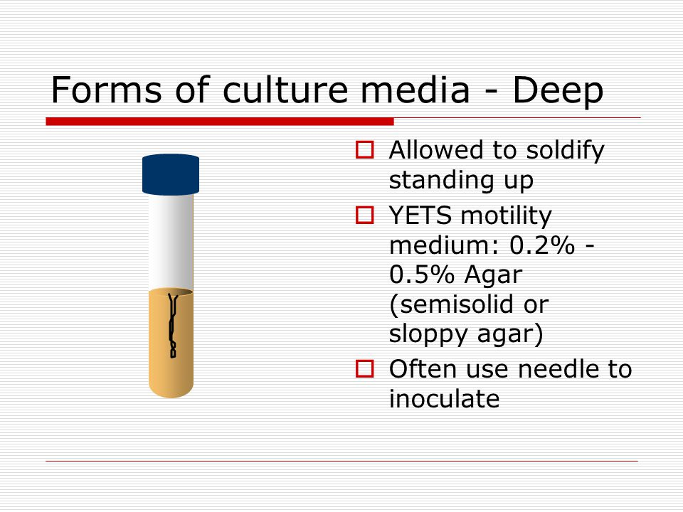 Forms of culture media - Deep Allowed to soldify standing up YETS motility medium: 0.2% - 0.5% Agar (semisolid or sloppy agar) Often use needle to ino