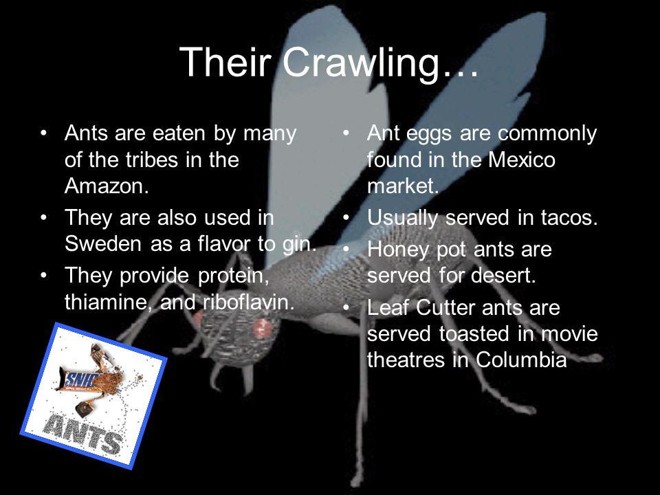 Their Crawling… Ants are eaten by many of the tribes in the Amazon.
