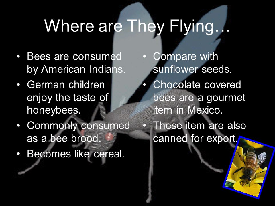 Where are They Flying… Bees are consumed by American Indians.