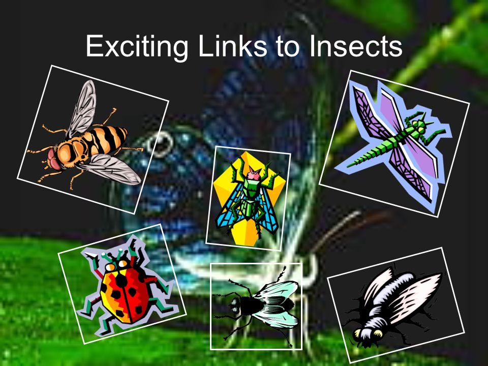 Exciting Links to Insects