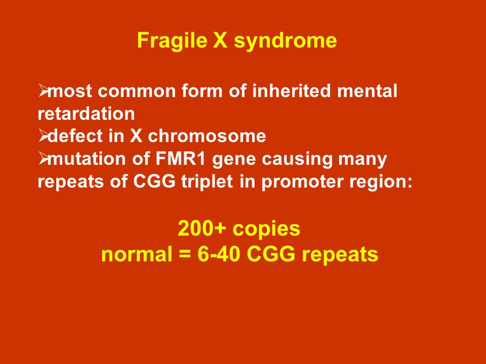 Fragile X syndrome most common form of inherited mental retardation defect in X chromosome mutation of FMR1 gene causing many repeats of CGG triplet i