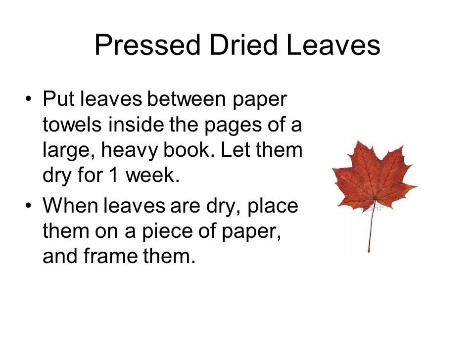 Pressed Dried Leaves Put leaves between paper towels inside the pages of a large, heavy book. Let them dry for 1 week. When leaves are dry, place them