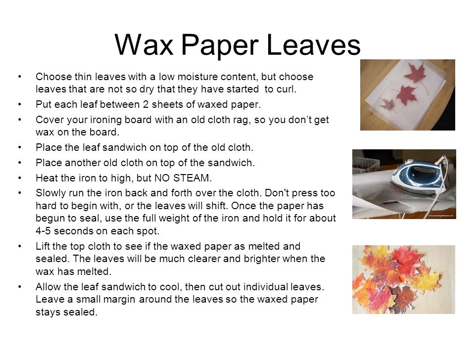 Wax Paper Leaves Choose thin leaves with a low moisture content, but choose leaves that are not so dry that they have started to curl. Put each leaf b