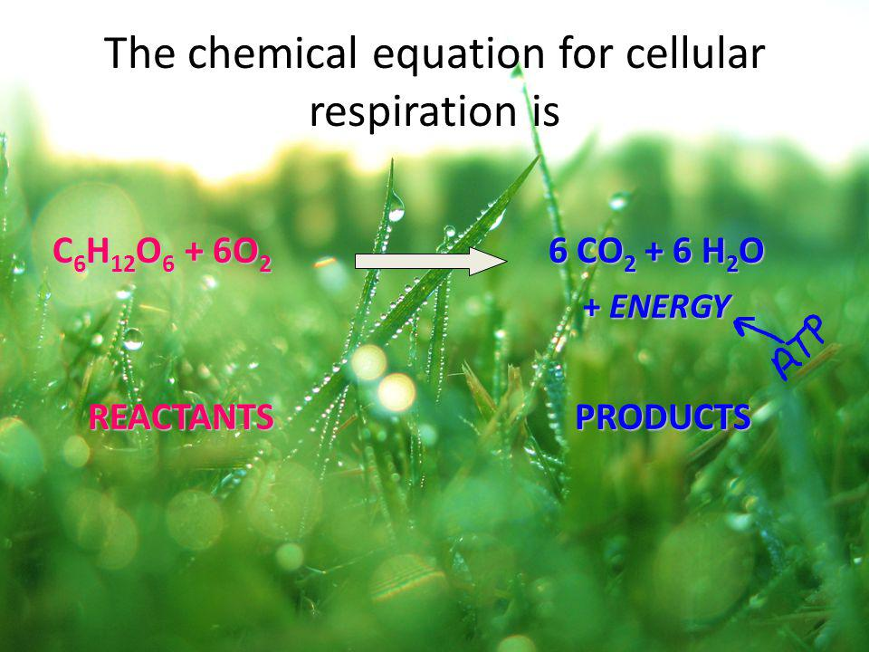 The chemical equation for cellular respiration is C 6 H 12 O 6 + 6O 2 6 CO 2 + 6 H 2 O + ENERGY + ENERGY REACTANTS PRODUCTS REACTANTS PRODUCTS