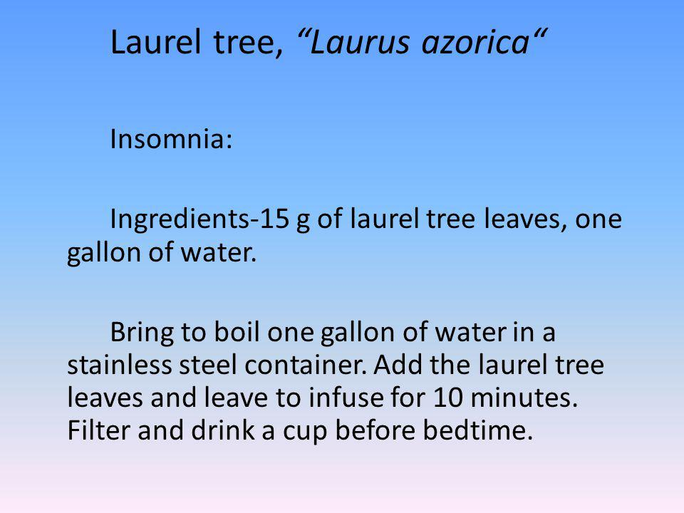 Laurel tree, Laurus azorica Insomnia: Ingredients-15 g of laurel tree leaves, one gallon of water.