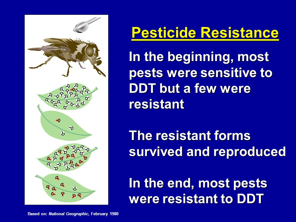 Pesticide Resistance In the beginning, most pests were sensitive to DDT but a few were resistant The resistant forms survived and reproduced In the en