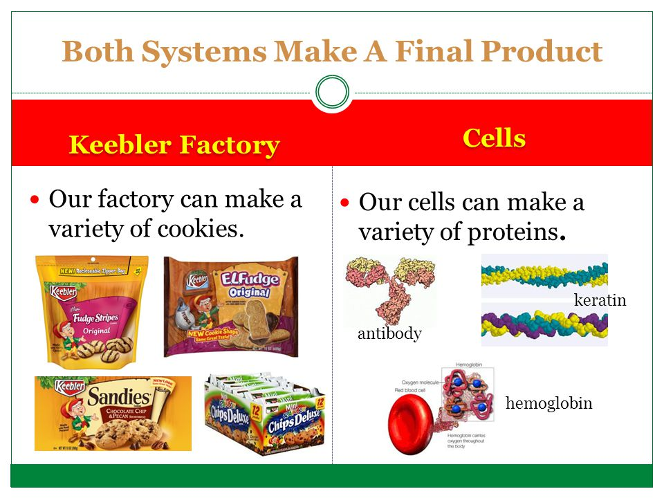 Parts to a Keebler Factory Equivalent Parts in a Cell Boss (Ernie Elf) Ma Keebler Cookie Recipes Worker Elves Assembly Line of Cookies Packaging/Shipping Department (Fast Eddie) Keebler Factory Cars Cookie Warehouse Security Door Factory Floor Generators Clean Up Crew Nucleus Nucleolus Chromatin (DNA) Ribosomes Endoplasmic Reticulum Golgi Body Vesicles Vacuoles Cell Membrane Cytoplasm Mitochondria Lysosomes Systems Have Parts that Work Together PRE-THINK.