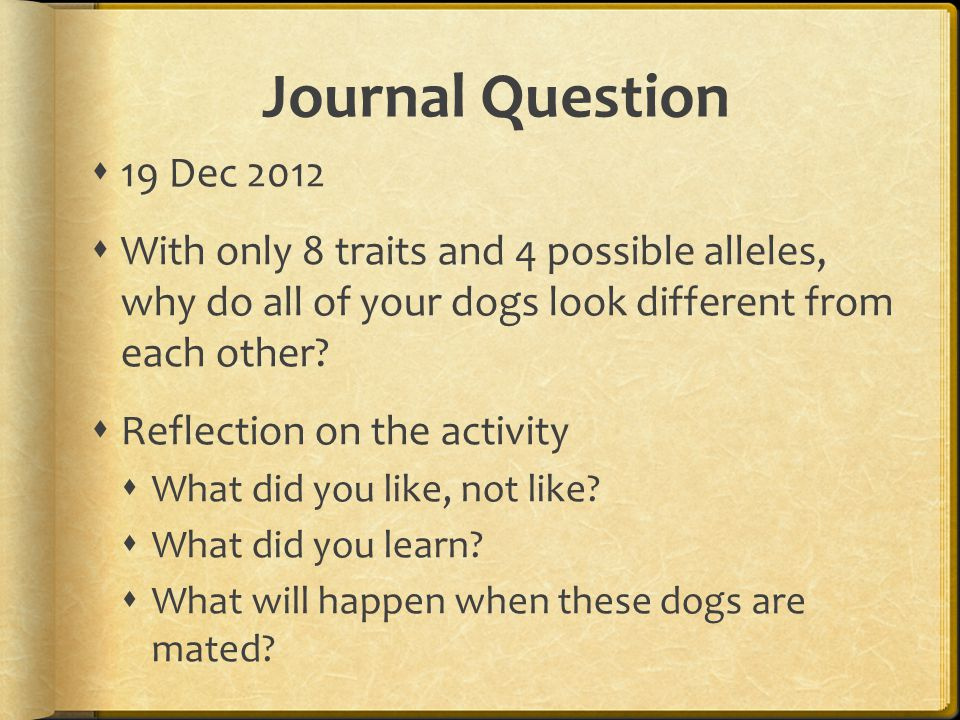 Journal Question 19 Dec 2012 With only 8 traits and 4 possible alleles, why do all of your dogs look different from each other.