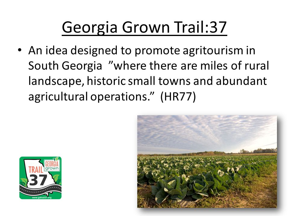 Georgia Grown Trail:37 An idea designed to promote agritourism in South Georgia where there are miles of rural landscape, historic small towns and abundant agricultural operations.