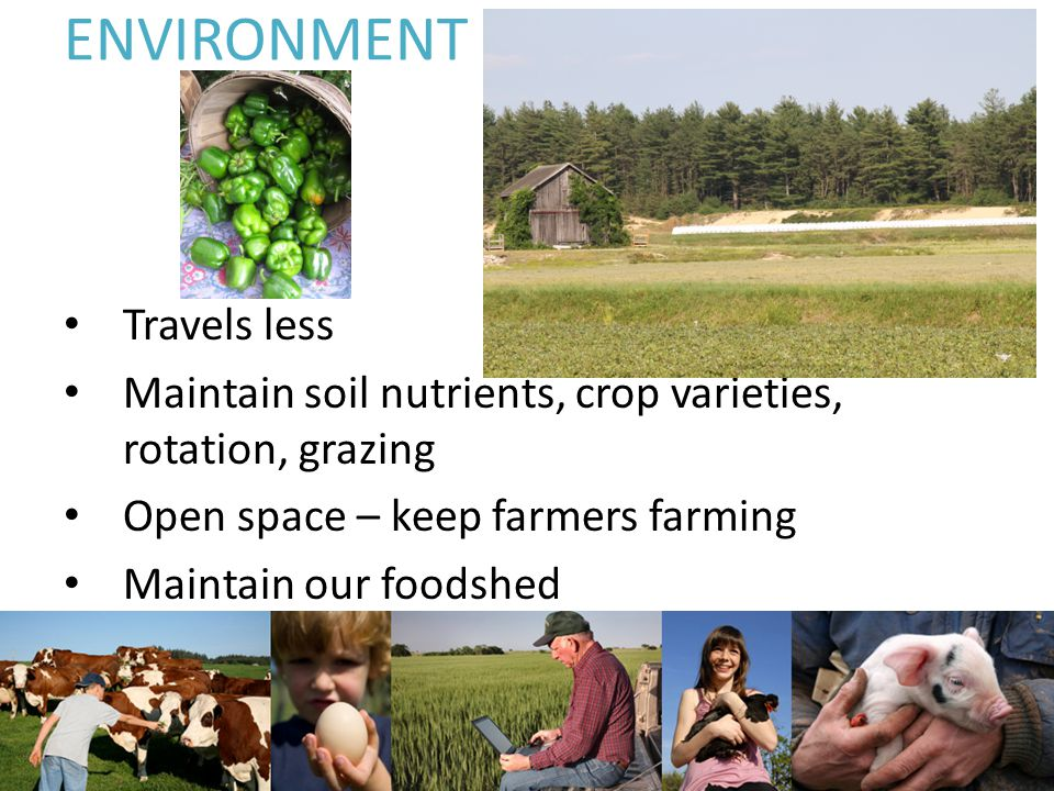 ENVIRONMENT Travels less Maintain soil nutrients, crop varieties, rotation, grazing Open space – keep farmers farming Maintain our foodshed
