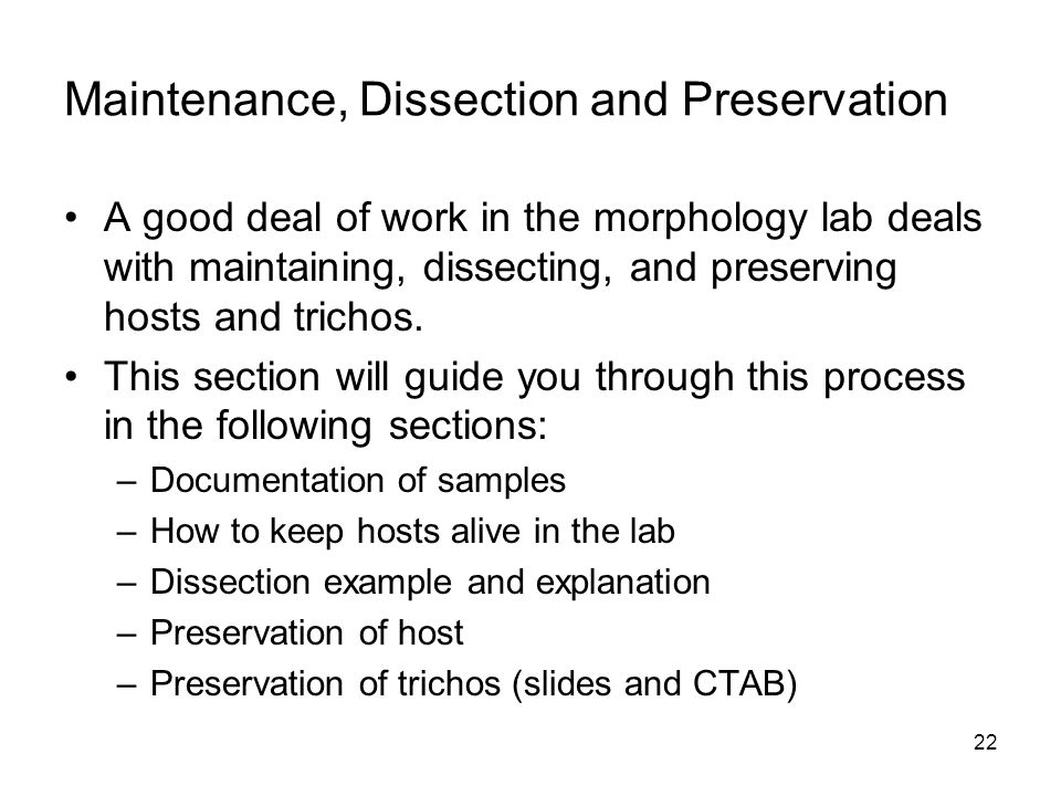 22 Maintenance, Dissection and Preservation A good deal of work in the morphology lab deals with maintaining, dissecting, and preserving hosts and tri