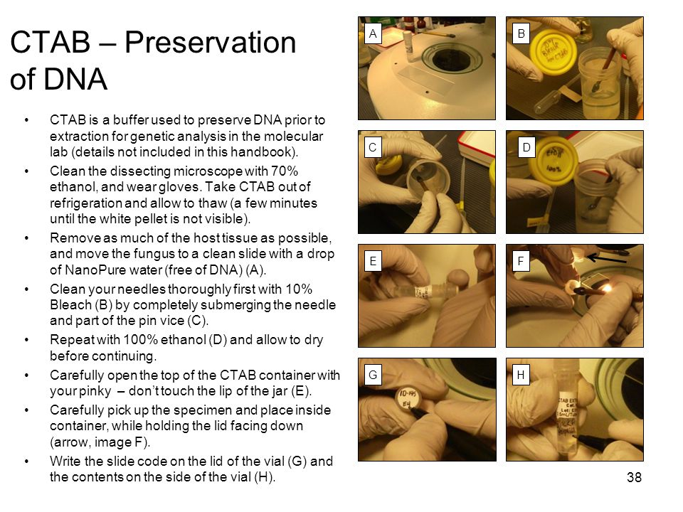 CTAB – Preservation of DNA CTAB is a buffer used to preserve DNA prior to extraction for genetic analysis in the molecular lab (details not included i