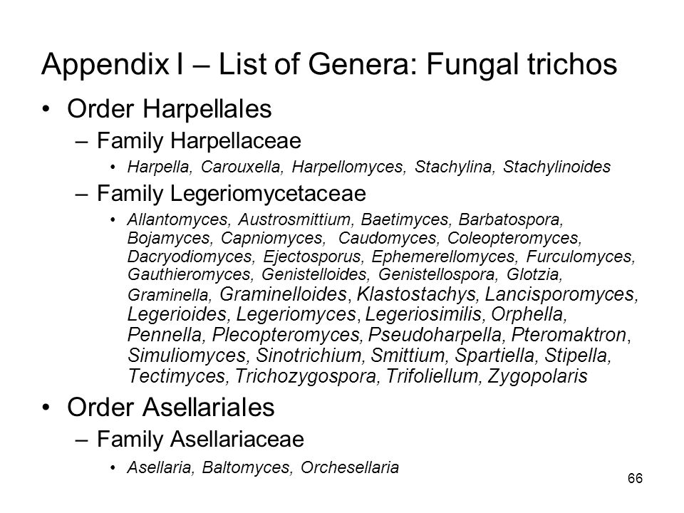 66 Appendix I – List of Genera: Fungal trichos Order Harpellales –Family Harpellaceae Harpella, Carouxella, Harpellomyces, Stachylina, Stachylinoides