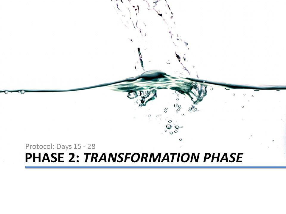 PHASE 2: TRANSFORMATION PHASE Protocol: Days 15 - 28