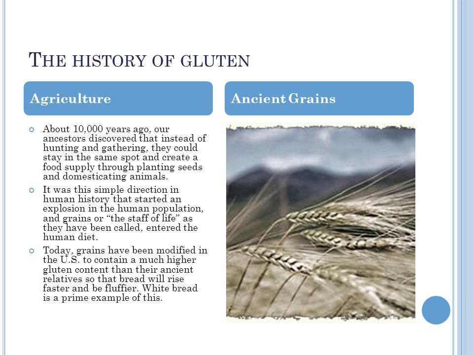 T HE HISTORY OF GLUTEN About 10,000 years ago, our ancestors discovered that instead of hunting and gathering, they could stay in the same spot and create a food supply through planting seeds and domesticating animals.