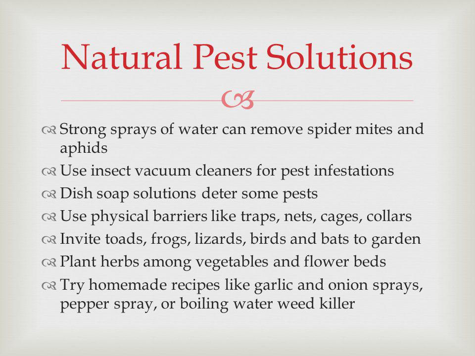 Strong sprays of water can remove spider mites and aphids Use insect vacuum cleaners for pest infestations Dish soap solutions deter some pests Use physical barriers like traps, nets, cages, collars Invite toads, frogs, lizards, birds and bats to garden Plant herbs among vegetables and flower beds Try homemade recipes like garlic and onion sprays, pepper spray, or boiling water weed killer Natural Pest Solutions