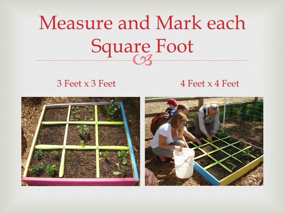 Measure and Mark each Square Foot 3 Feet x 3 Feet4 Feet x 4 Feet