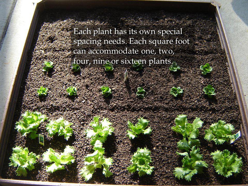 Each plant has its own special spacing needs. Each square foot can accommodate one, two, four, nine or sixteen plants.