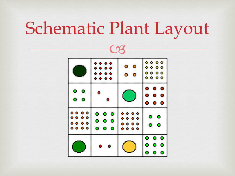 Schematic Plant Layout