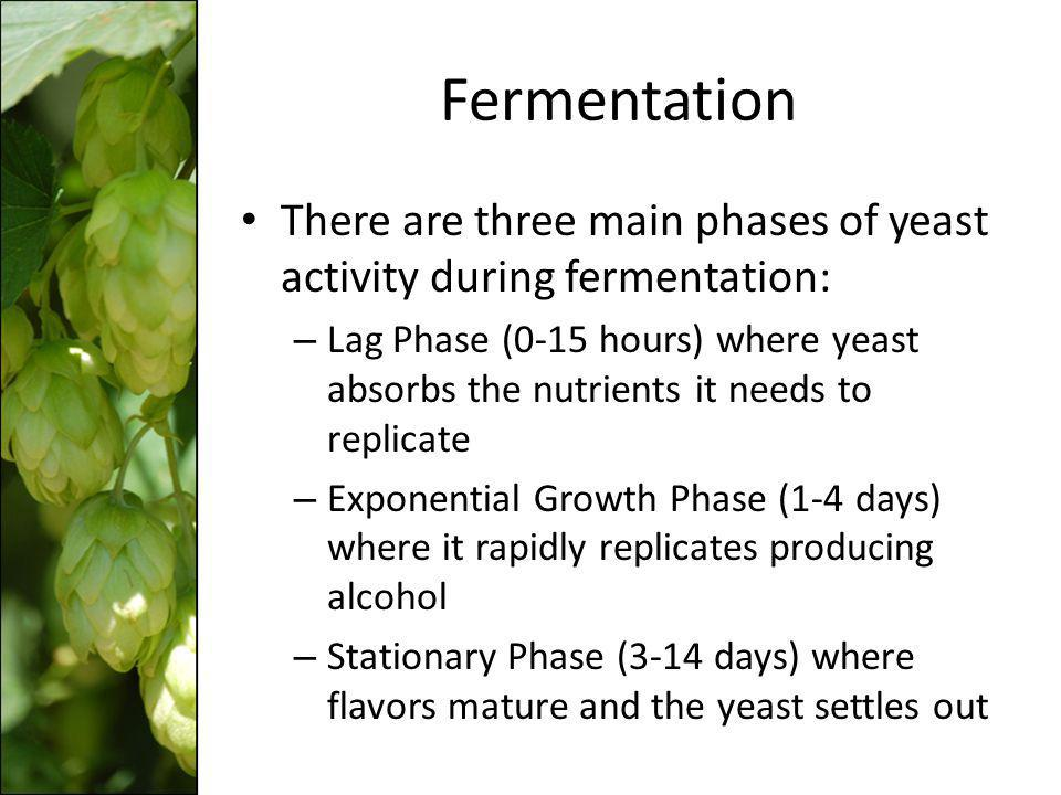 Fermentation There are three main phases of yeast activity during fermentation: – Lag Phase (0-15 hours) where yeast absorbs the nutrients it needs to