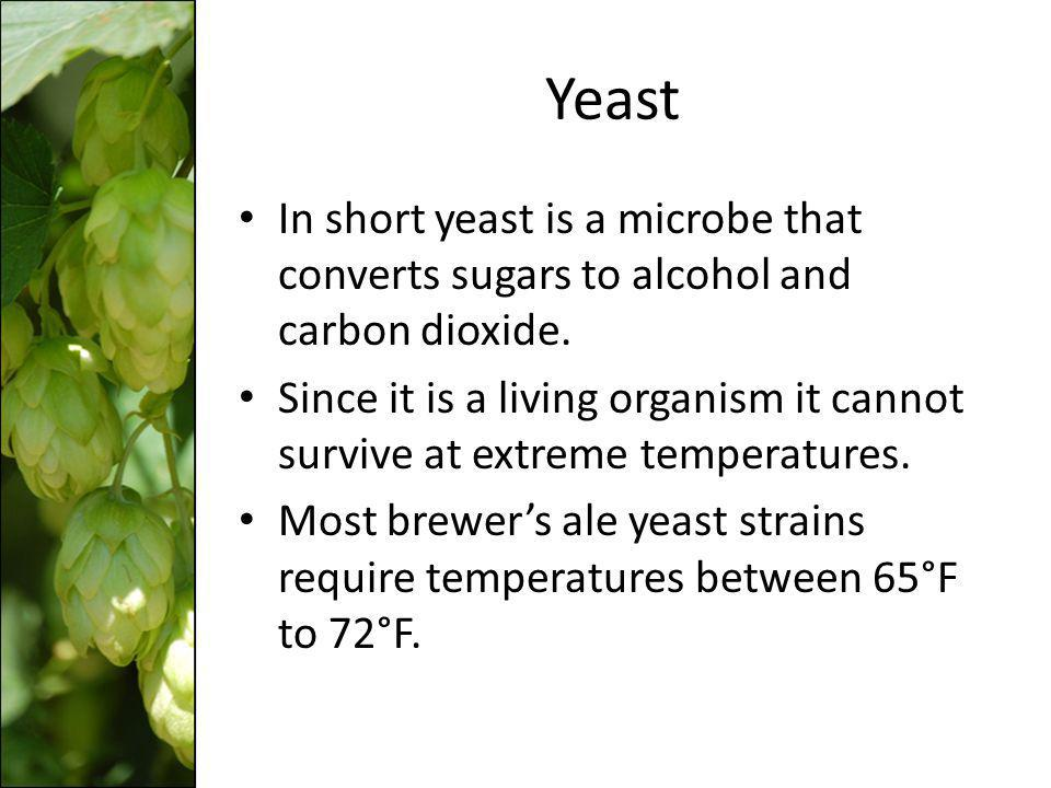 Yeast In short yeast is a microbe that converts sugars to alcohol and carbon dioxide. Since it is a living organism it cannot survive at extreme tempe