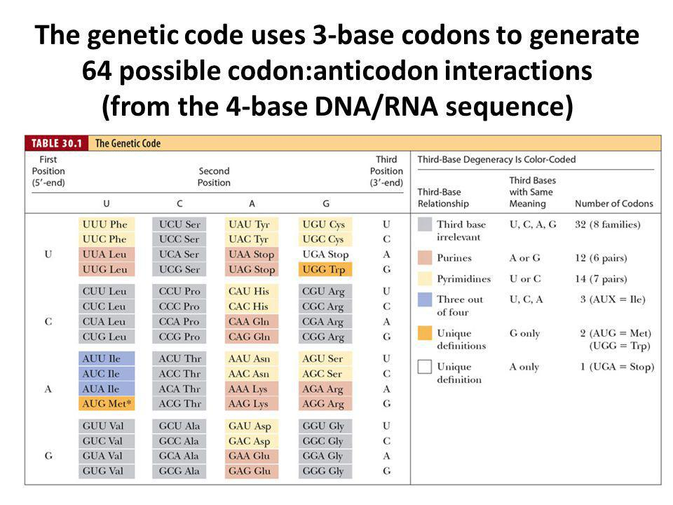 The genetic code uses 3-base codons to generate 64 possible codon:anticodon interactions (from the 4-base DNA/RNA sequence)
