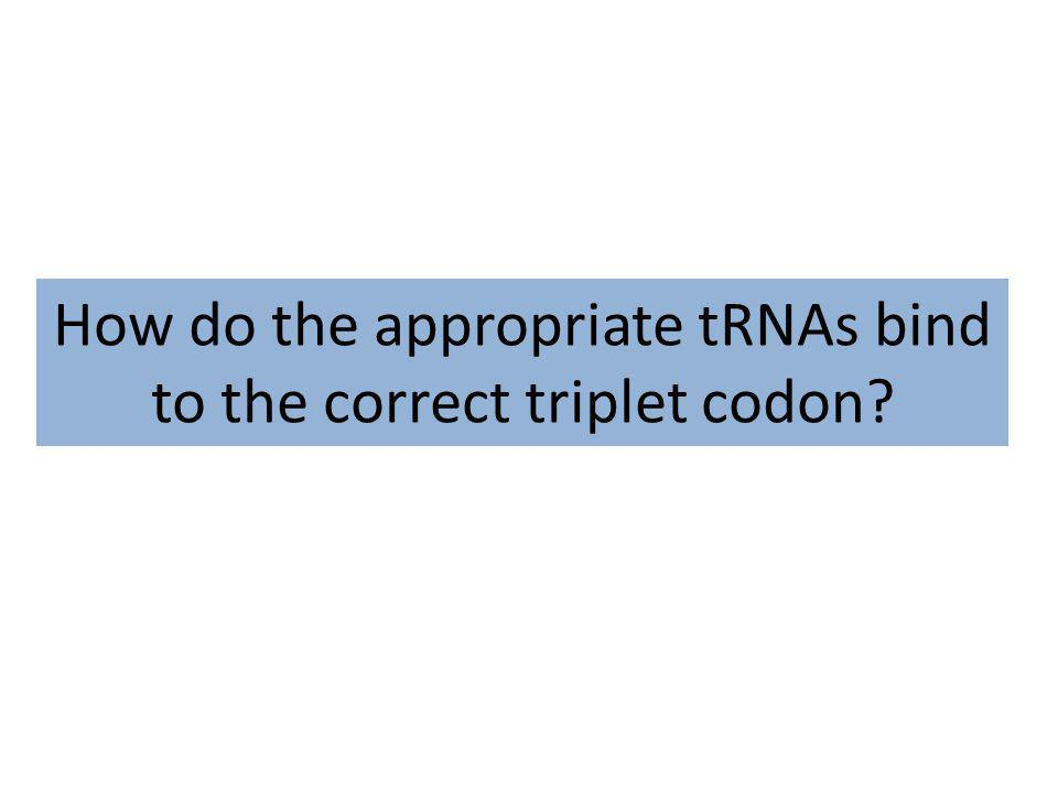 How do the appropriate tRNAs bind to the correct triplet codon?