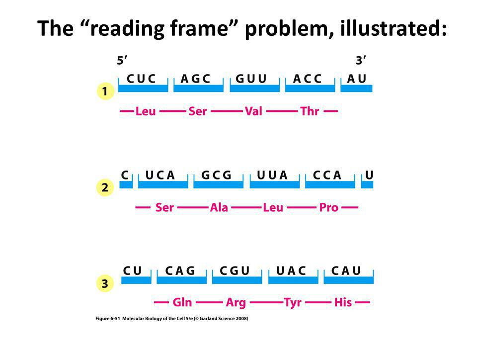 The reading frame problem, illustrated: