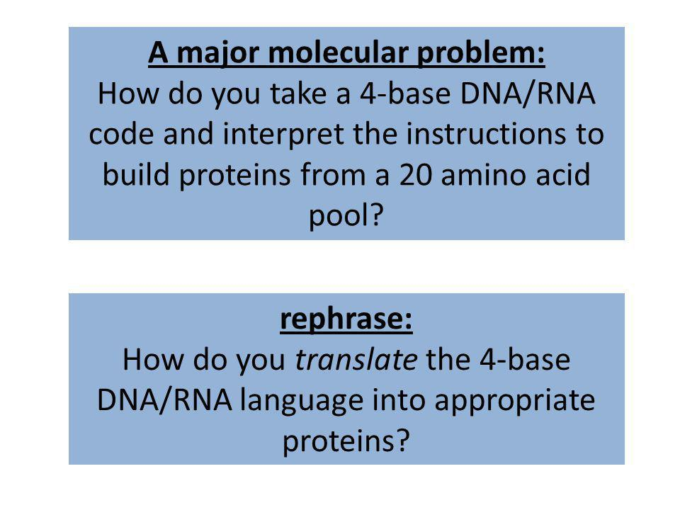 A major molecular problem: How do you take a 4-base DNA/RNA code and interpret the instructions to build proteins from a 20 amino acid pool? rephrase: