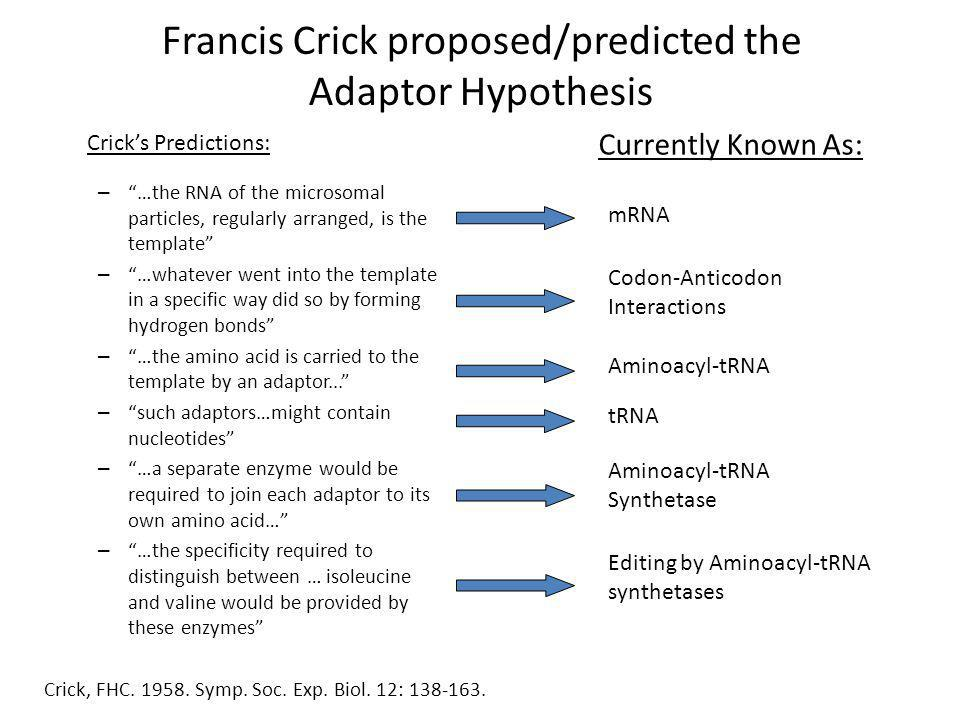 Francis Crick proposed/predicted the Adaptor Hypothesis – …the RNA of the microsomal particles, regularly arranged, is the template – …whatever went into the template in a specific way did so by forming hydrogen bonds – …the amino acid is carried to the template by an adaptor...
