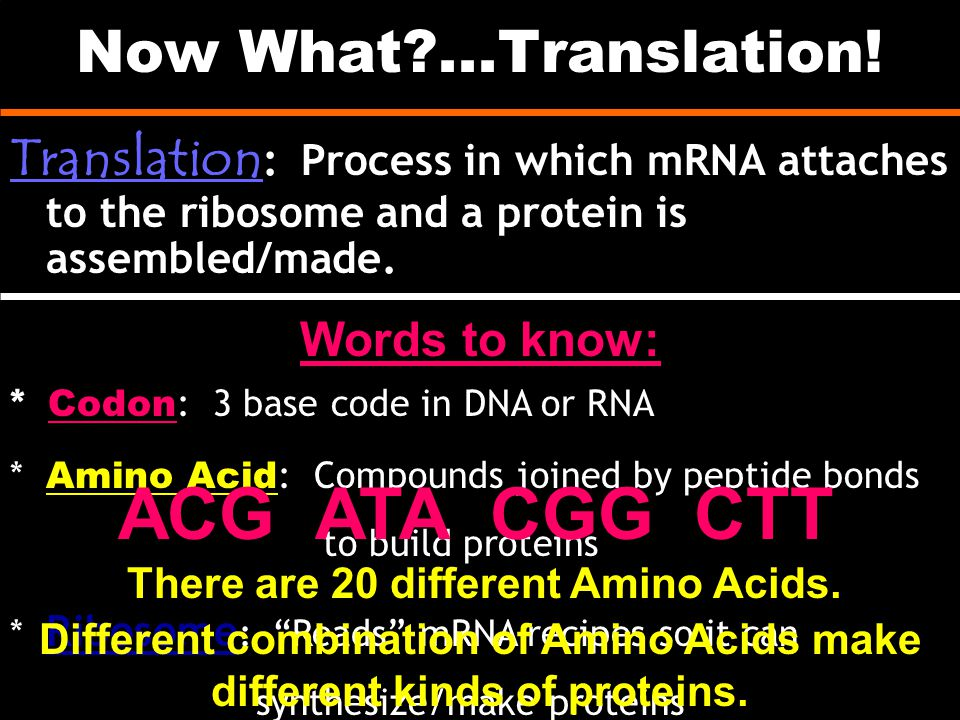 Now What?...Translation! Translation : Process in which mRNA attaches to the ribosome and a protein is assembled/made. * Codon : 3 base code in DNA or