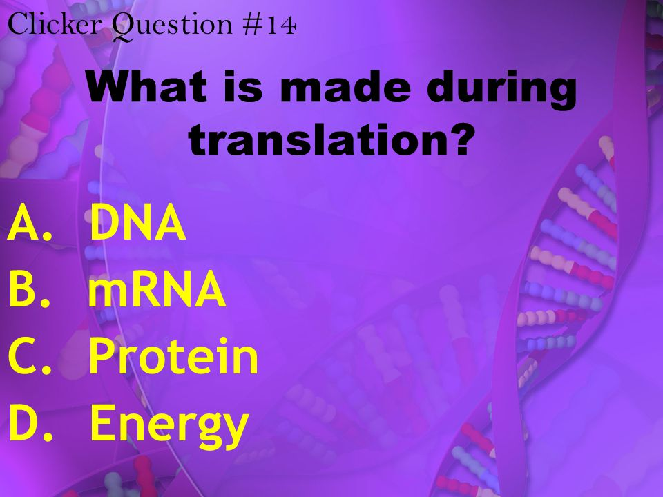 What is made during translation? A. DNA B. mRNA C. Protein D. Energy Clicker Question #14