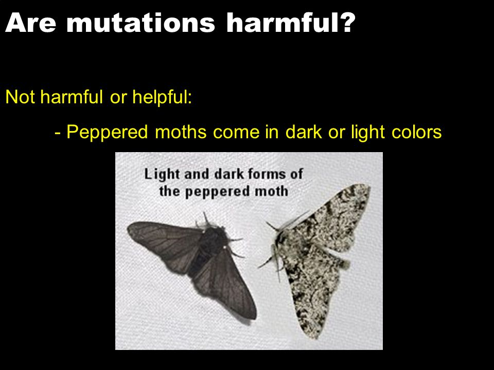 Are mutations harmful? Not harmful or helpful: - Peppered moths come in dark or light colors