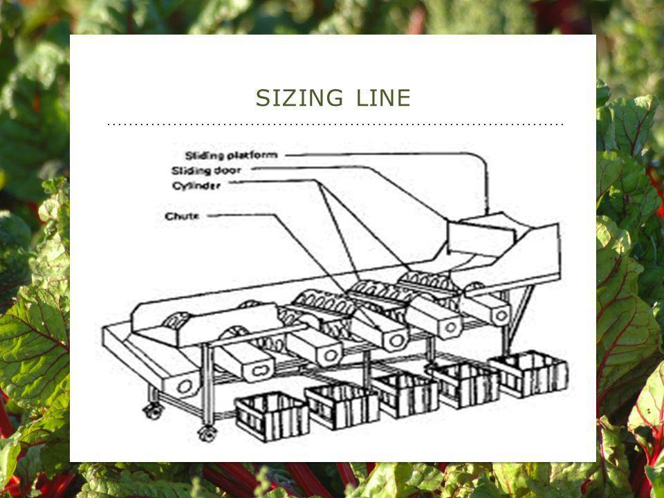SIZING LINE