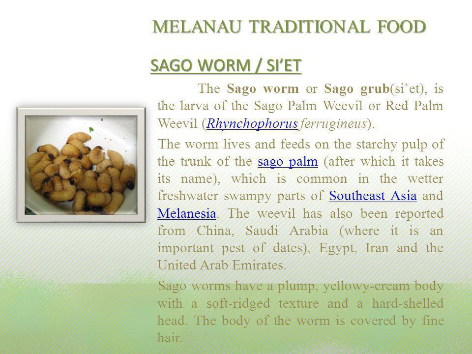 MELANAU TRADITIONAL FOOD SAGO WORM / SIET The Sago worm or Sago grub(siet), is the larva of the Sago Palm Weevil or Red Palm Weevil (Rhynchophorus fer