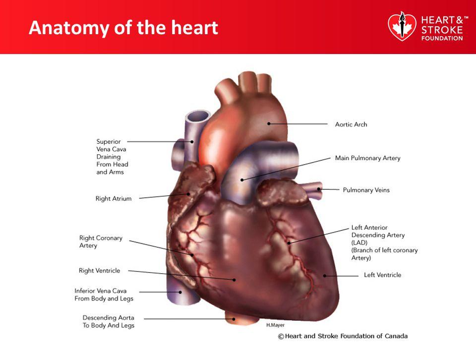 Classifications of hypertension CategorySystolic Diastolic Optimal <120-129 <80-85 mm Hg High blood pressure 140 90 mm Hg or higher High normal 130-139 80-89 mm Hg or higher Canadian Hypertension Education Program (CHEP), 2012