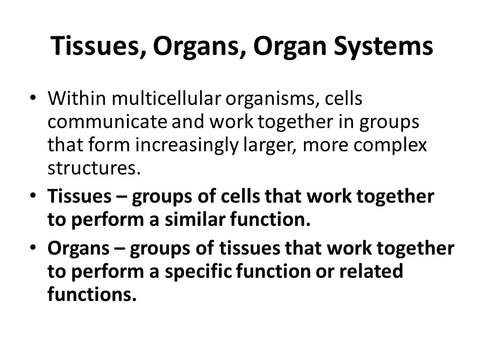 Within multicellular organisms, cells communicate and work together in groups that form increasingly larger, more complex structures. Tissues – groups
