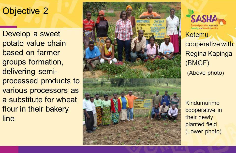 Develop a sweet potato value chain based on farmer groups formation, delivering semi- processed products to various processors as a substitute for wheat flour in their bakery line Kotemu cooperative with Regina Kapinga (BMGF) (Above photo) Kindumurimo cooperative in their newly planted field (Lower photo) Objective 2