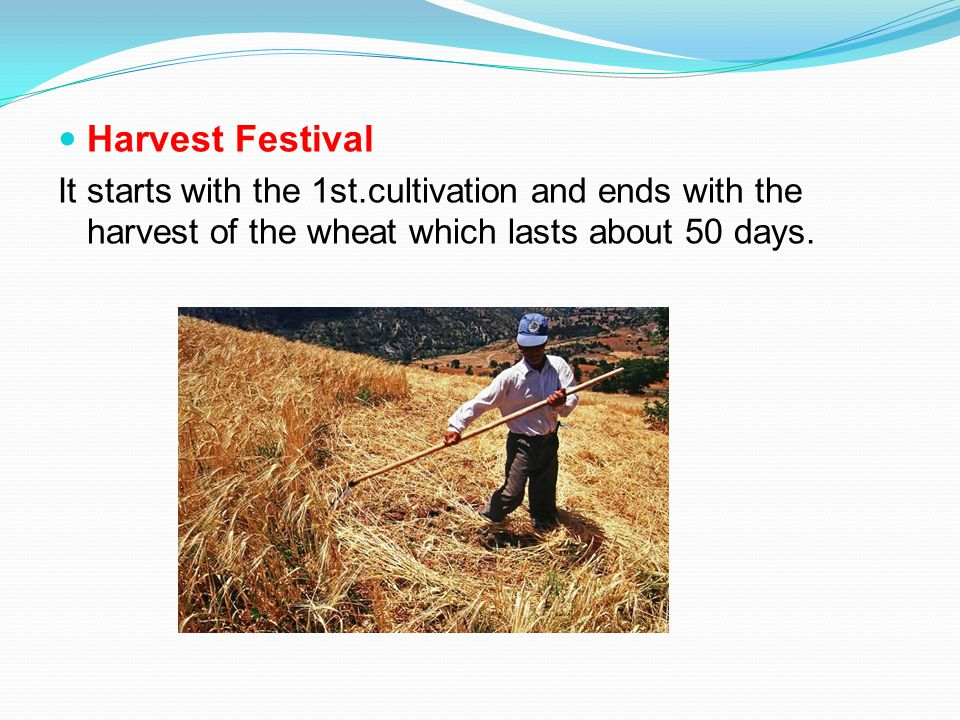 Harvest Festival It starts with the 1st.cultivation and ends with the harvest of the wheat which lasts about 50 days.