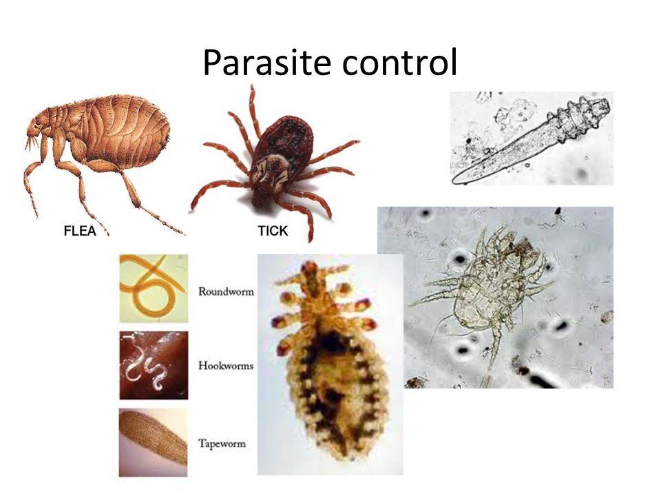 Parasite control